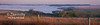 This panoramic was taken early one morning in Eastern Vigo County, IN!  The fog was hanging so thick over the water and land surrounding this pond!  In the distance you can just make out the top of a piece of red farm equipment sitting in the field!