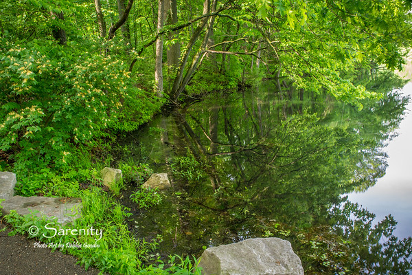 Beautiful reflections are seen in this image created at Hawthorn Park one Spring morning after a heavy rainfall!