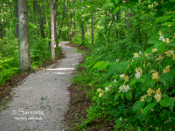 A view down the hiking trail at Hawthorn Park!