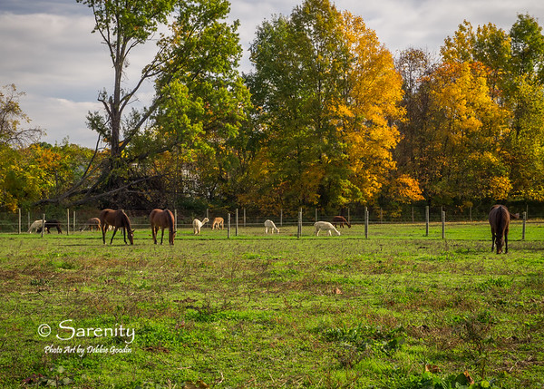 Fall Pastures