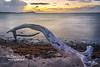 Evening  Eye Adrift -Driftwood Sunset - Prune Bay, St. Croix, USVI