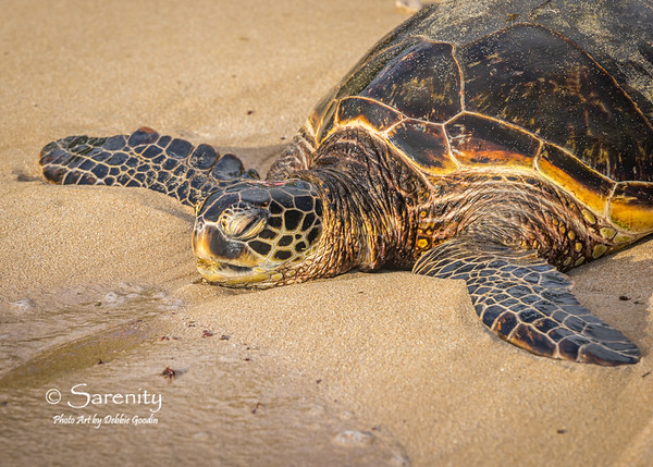 Honu (Green Sea Turtle)