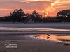 Great Blue Heron at sunset and low tide!