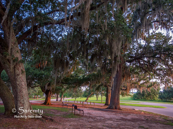 Amazing Spanish Moss hangs from these Live Oak Trees near the marina one evening at sunset!