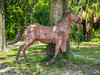 After Hurrican Katrina, this horse which stood at the entrance to Beauvoir was found out at sea by a local fisherman!  It had been floating in the waters of the Gulf for over 4 months!  Notice the barnicles on it?