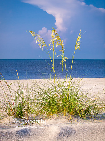 Glowing grasses on the beach early one morning!