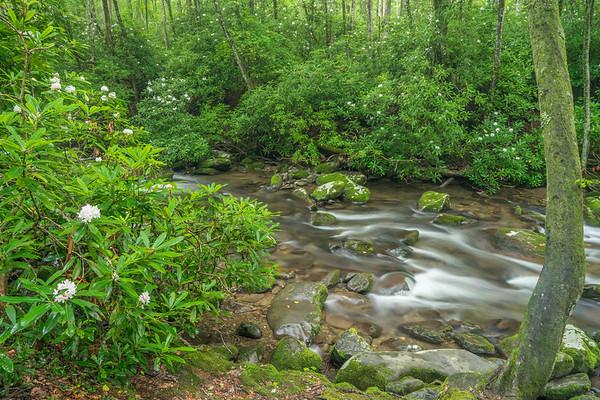 Spring blooms - Oconaluftee River