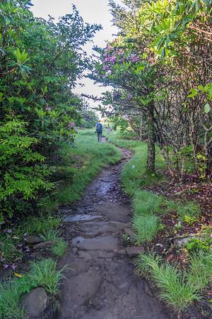 Andrews Bald Trail
