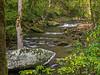 Chasteen Creek & Cascade