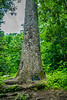 Joyce Kilmer Memorial Forest, NC