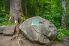 Joyce Kilmer Memorial Forest, NC