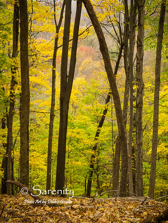 Beautiful Fall Colors of the next hillside are framed up by this arching tree in Radnor Lake State Park!