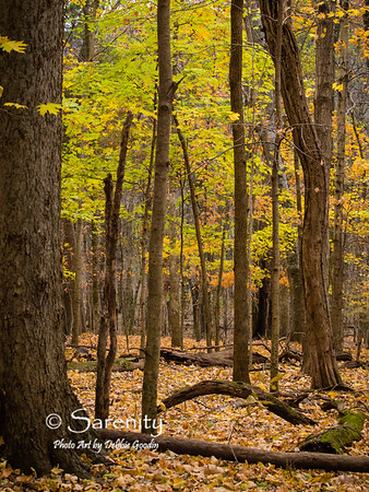 Beautiful Fall Color of Radnor Lake State Park!