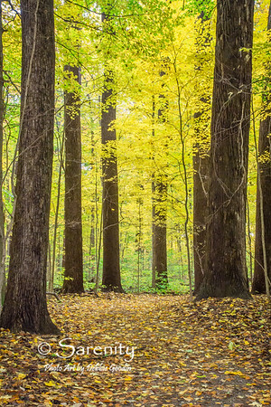 Woods Aglow, Turkey Run State Park, Marshall, IN, Parke County