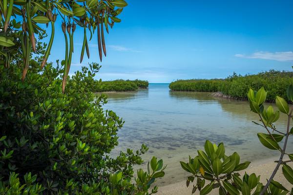 Mangrove Visions