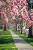 Spring's Pathway