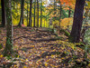 This trees amazing root system dusted with colorful Autumn leaves made a beautiful scene!