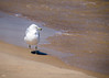 I took this photo on the shore of Lake Michagan at Indiana Dunes!  A beautiful Ring Billed Gull!