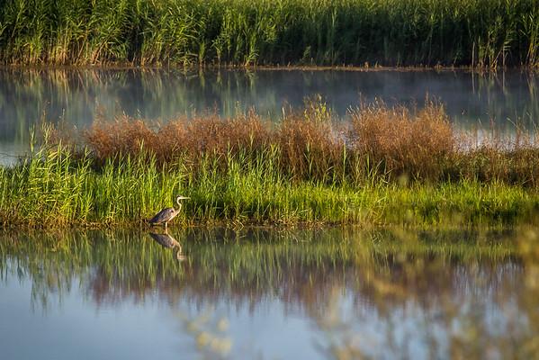 Heron Reflected