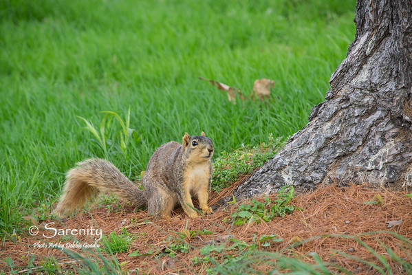 A squirrel I photographed on St. Mary's of the Woods College campus on a Spring day!