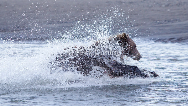 Salmon fishing posture 2