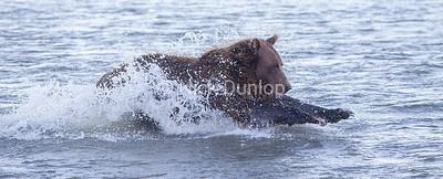 Salmon fishing posture