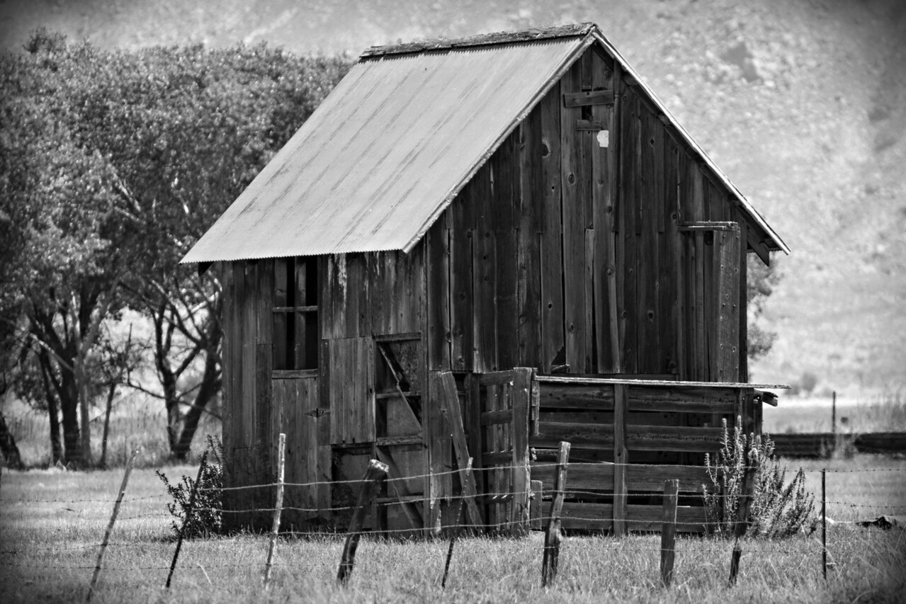Weathered Old Shed