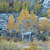 Bishop Creek Canyon