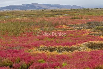 Marsh Color 1