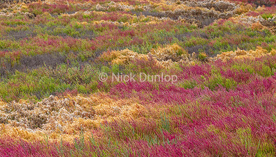 Marsh Color 2
