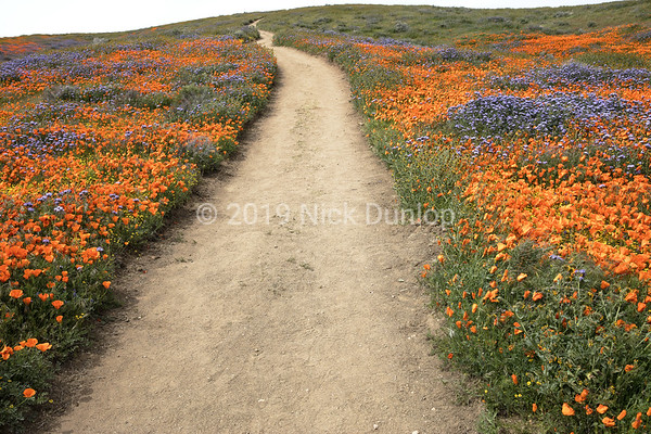 Antelope Valley Poppy Preserve 2