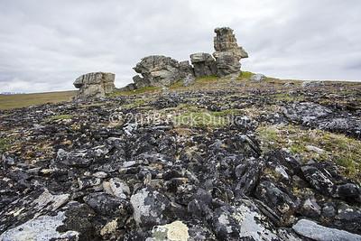 Gyrfalcon Nest Site 1