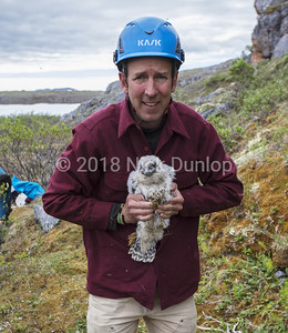 David Anderson with a young Gyrfalcon