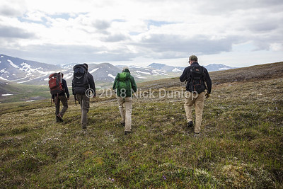 Hiking the tundra to a gyrfalcon eyrie