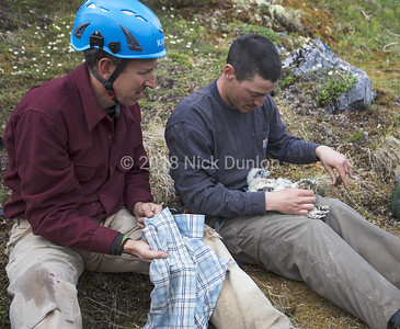 David and Mike prepare to band a young falcon