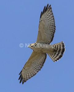 Broadwing Hawk 2