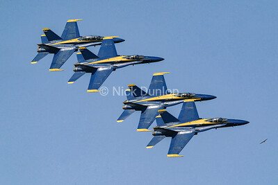 Hawk flying with the Blue Angels