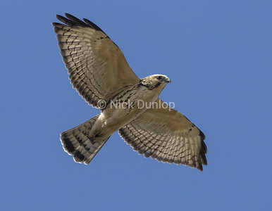 Broadwing Hawk 3