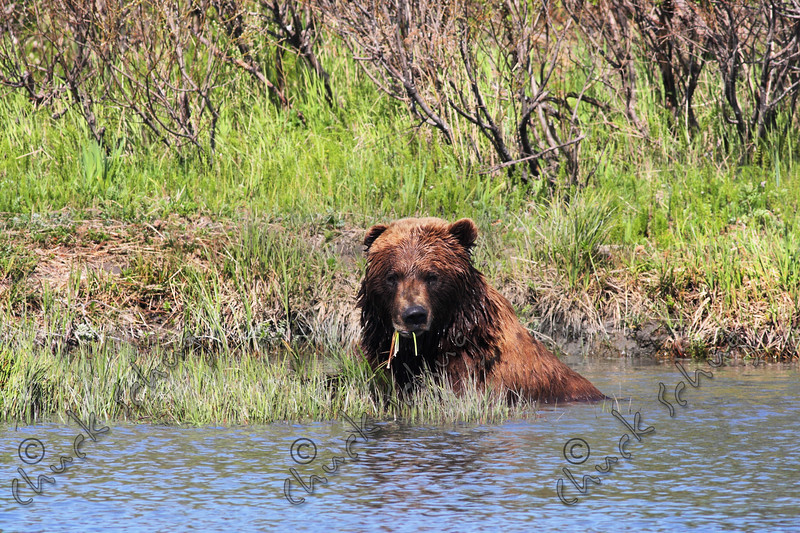 WATER GRIZZLY
