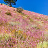 Colored Hillside