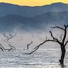 Lake Tree Silhouettes