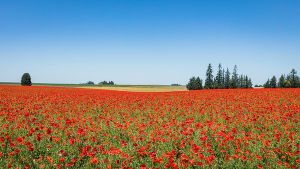 Red Flower Day