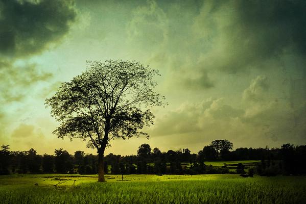 That Tree