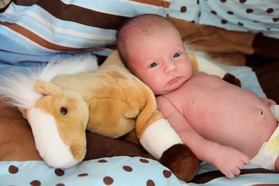 Westin Newborn-20
