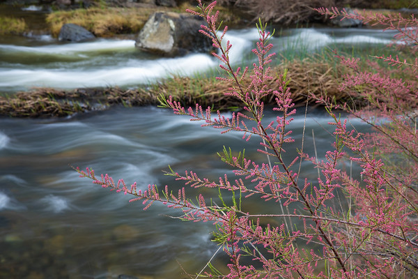 Spring in Bear Valley