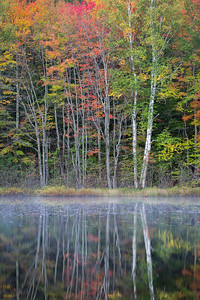 Hiawatha National Forest 4:  Michigan