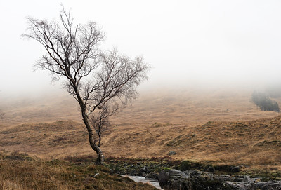 Tree on the bank of the River Etive in low cloud