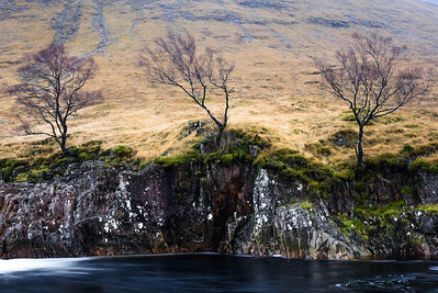 Trees on the bank of River Etive