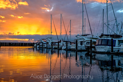 Explosion Of Color, Anacortes Marina, Anacotes, WA
