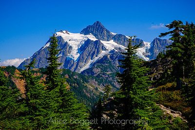Shuksan In Summer